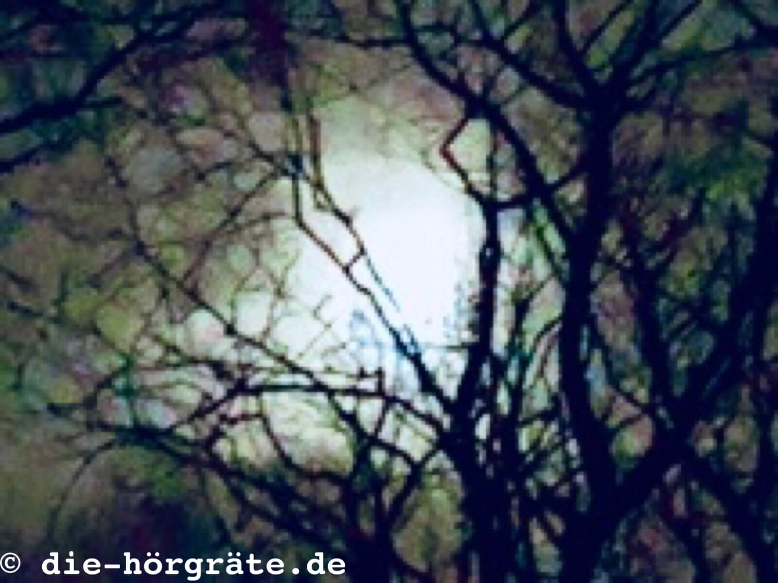Vollmond über dem Wald
