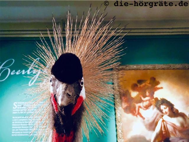 Vogel mit weit abstehenden Kopffedern