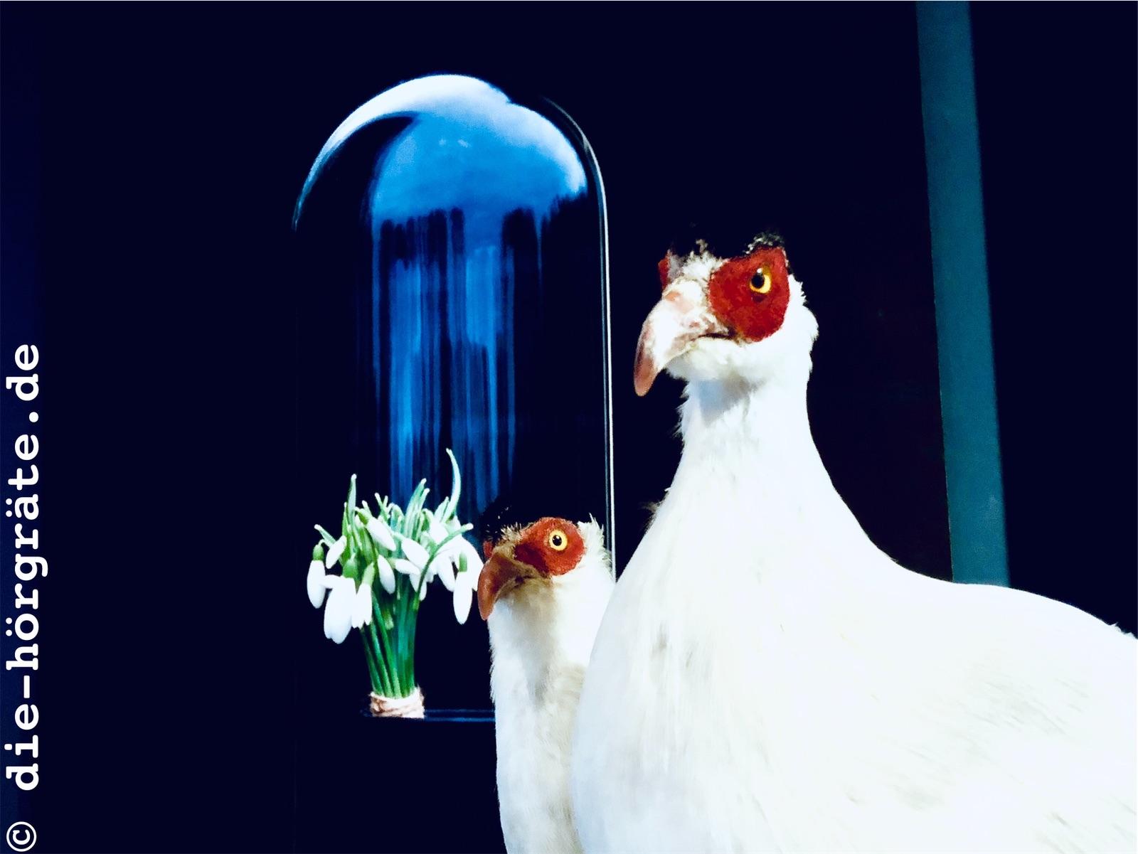 zwei weiße Vögel