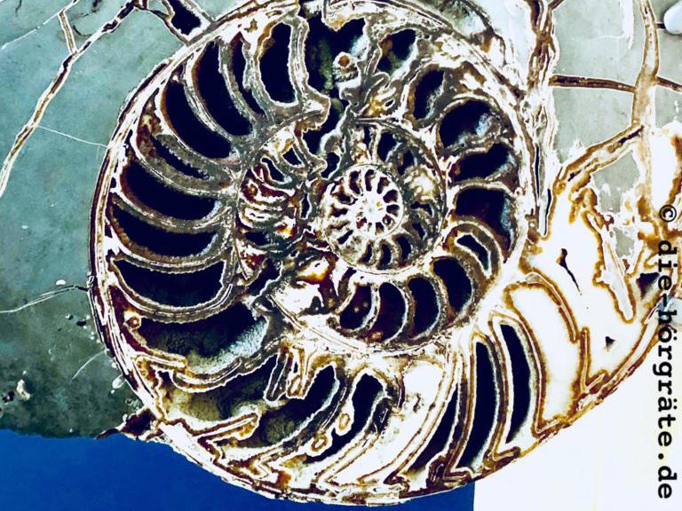 eine versteinerte Schnecke aus dem Natural History Museum in London
