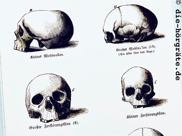 Interpretation von Schädelformen