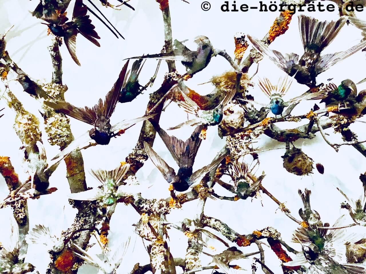 ausgestopfte Vögel, die wild durcheinander flattern