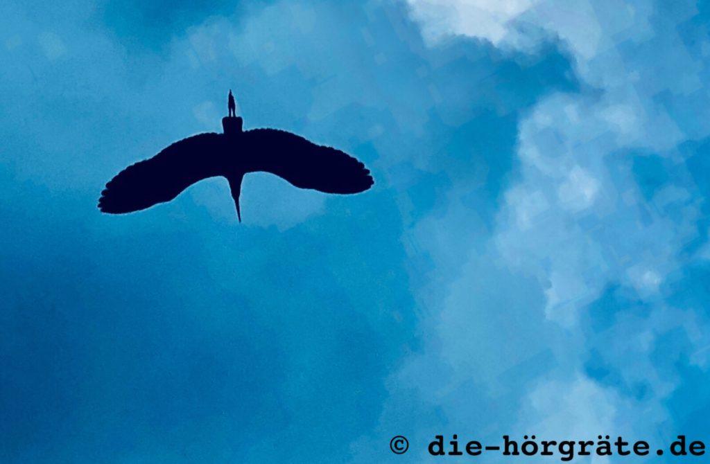 Reiher beim Fliegen