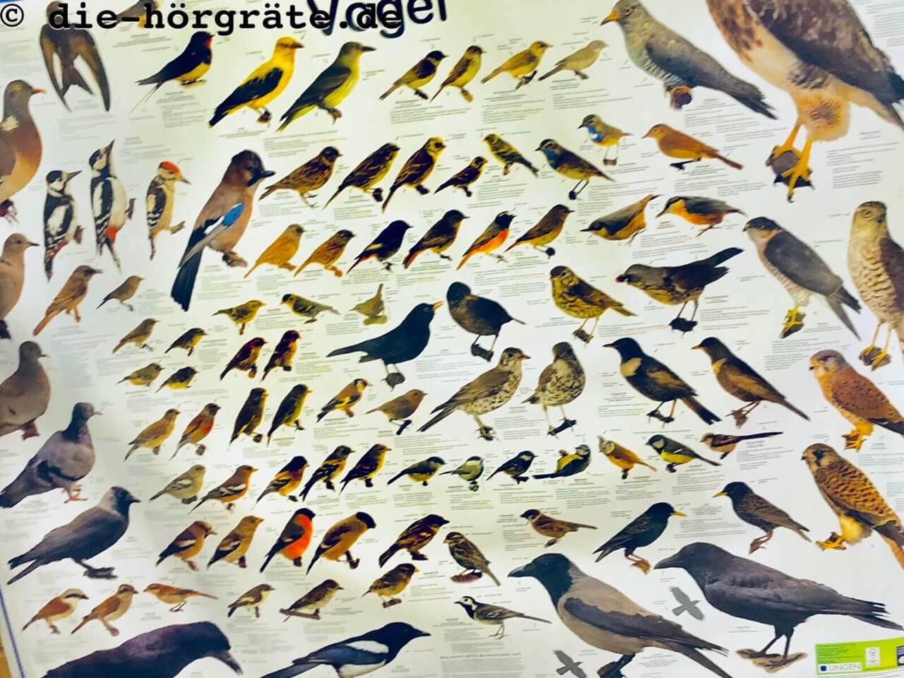 geordnete Vögel