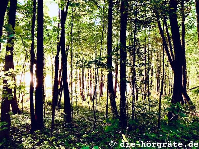 Wald am Müggelsee in Berlin Köpenick