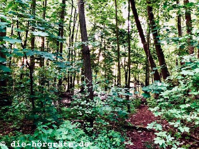 Waldstück mit Nachtigallen